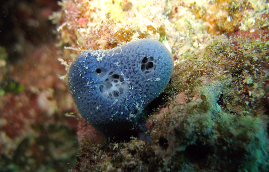 Red Sea Sponge. Image: Gert Wörheide