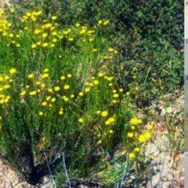 'Invasive' species have been around much longer than believed