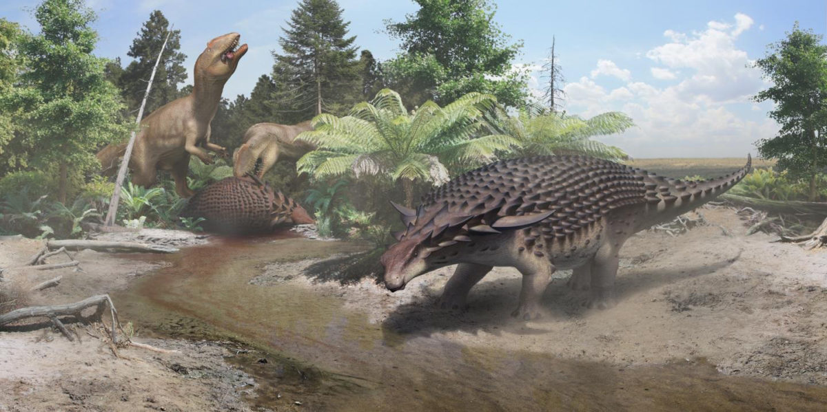 An illustration of the 110-million-year-old Borealopelta Markmitchelli discovered in Alberta, Canada. Credit Courtesy of the Royal Tyrrell Museum of Palaeontology, Drumheller, Canada.