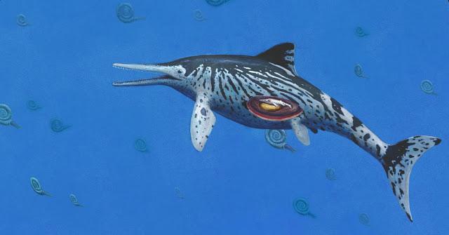Life reconstruction of the Ichthyosaurus. Credit: University of Manchester
