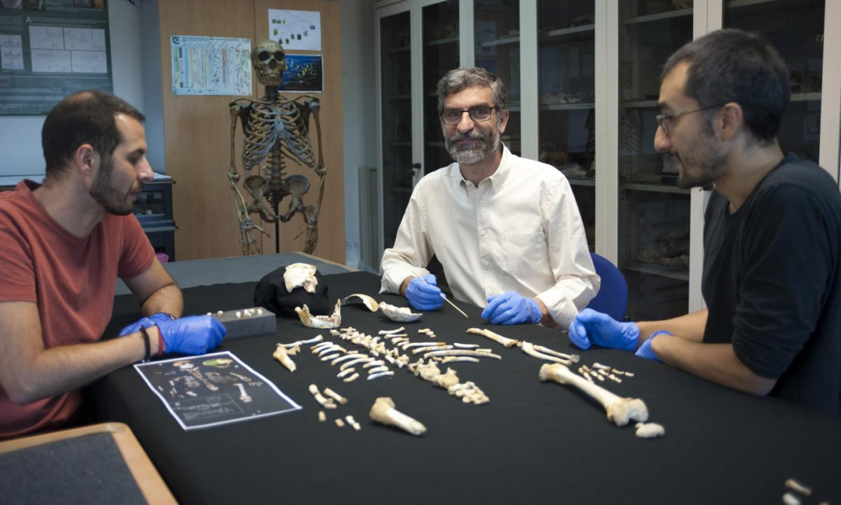(Left to right) Antonio García-Tabernero, Antonio Rosas and Luis Ríos beside the Neanderthal child's skeleton. Credit: ANDRÉS DÍAZ-CSIC COMMUNICATIONS DEPARTMENT