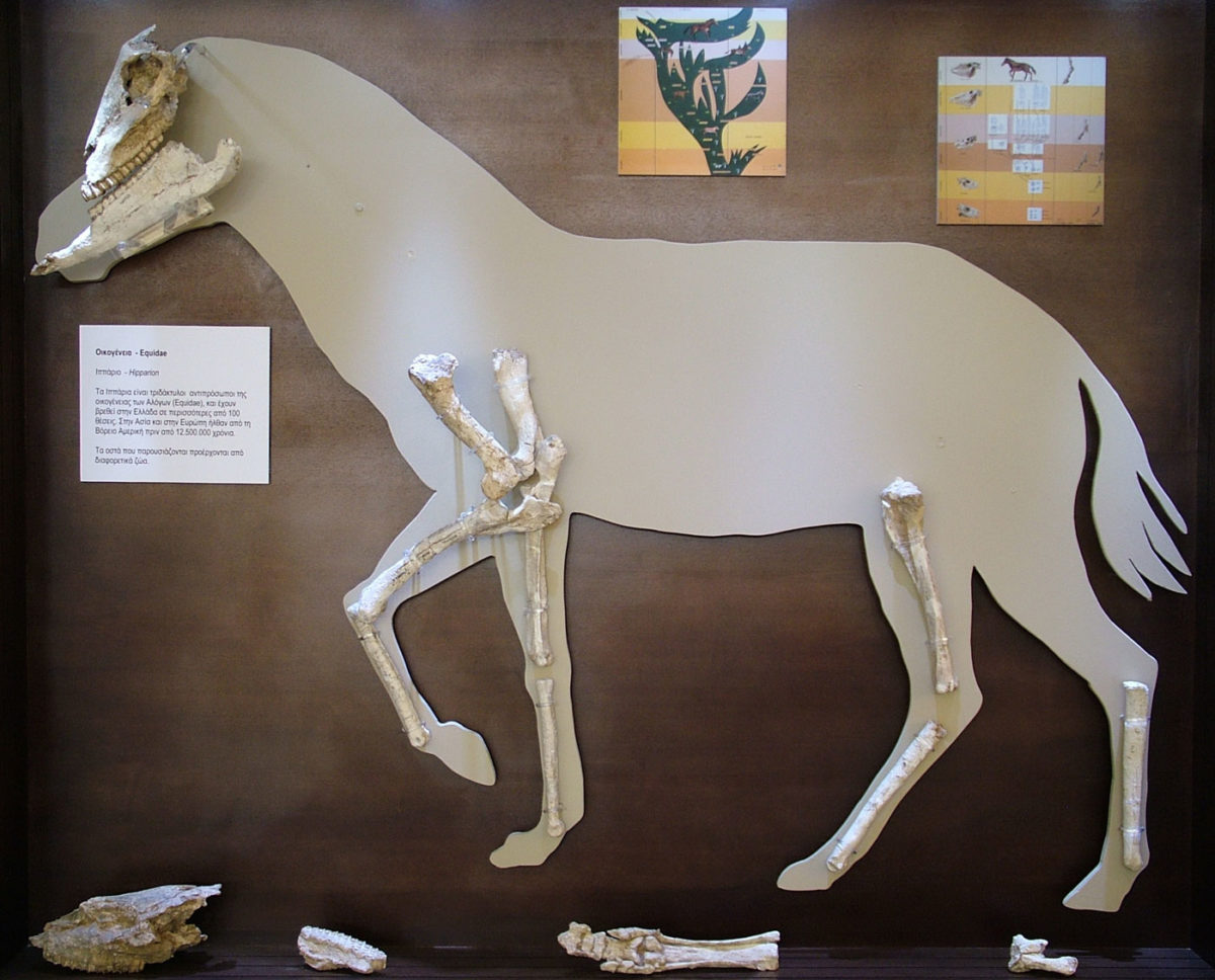 Reconstruction of a small horse with bones found at Kerasia (photo: G.Theodorou Archive /Athens and Macedonian News Agency).