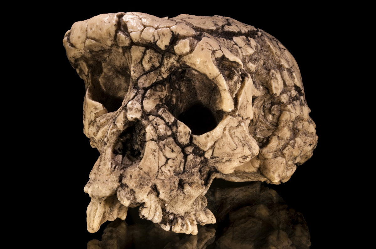Little is known about the size of the last common ancestor of humans and all living apes.