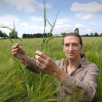 Crops evolving ten millennia before experts thought