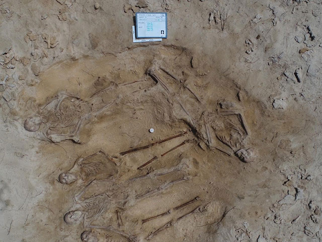 An international team of archaeologists has discovered a mass grave consisting of five full skeletons in the Abrolhos Islands off WA, the result of the shipwreck of the Batavia in 1629 [Credit: UWA]
