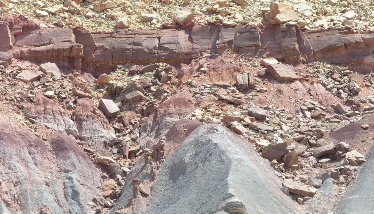 New pollen and spore data from the Chinle Formation at the Petrified Forest National Park, Arizona, suggest that a extinction of plants occurred between 213 and 217 million years ago in tandem with an extinction of several reptile groups.