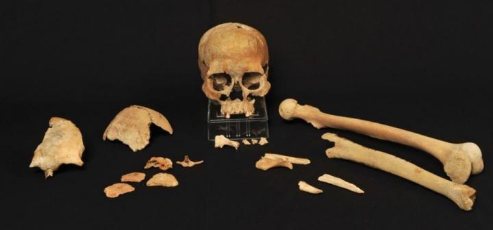 Skeletal fragments from Hummervikholmen, one of sites featured in this study. Credit: Beate Kjørslevik