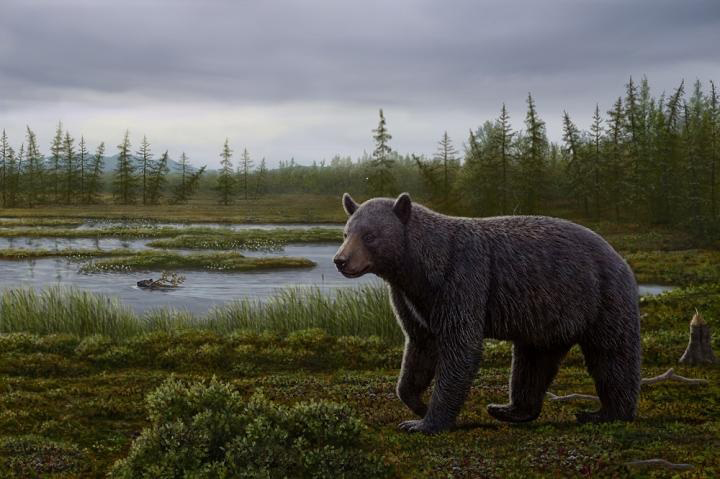 Reconstruction of the mid-Pliocene Protarctos abstrusus in the Beaver Pond site area during the late summer.  Credit: Art by Mauricio Antón based on research of this paper and with input on plant community from Alice Telka.