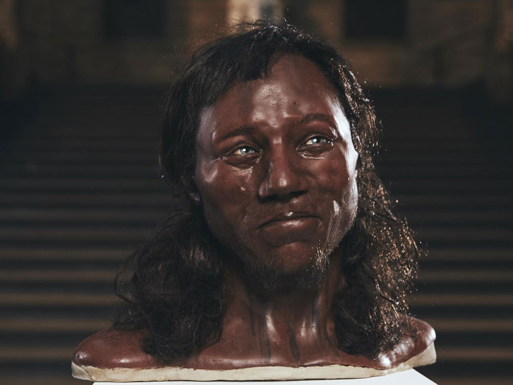 A reconstruction model from the skull of 'Cheddar Man' after DNA analysis of the 10,000-year-old skeleton  shows early Britons had dark skin and blue eyes [Credit: Channel 4]