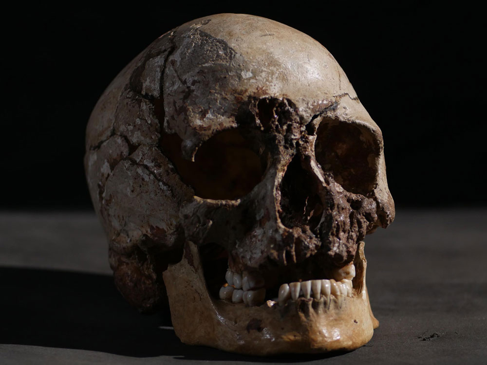 Cheddar Man Skull. Credit: Channel 4