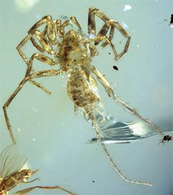 The entire specimen in dorsal ventral view.