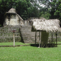 First evidence of live-traded dogs for Maya ceremonies