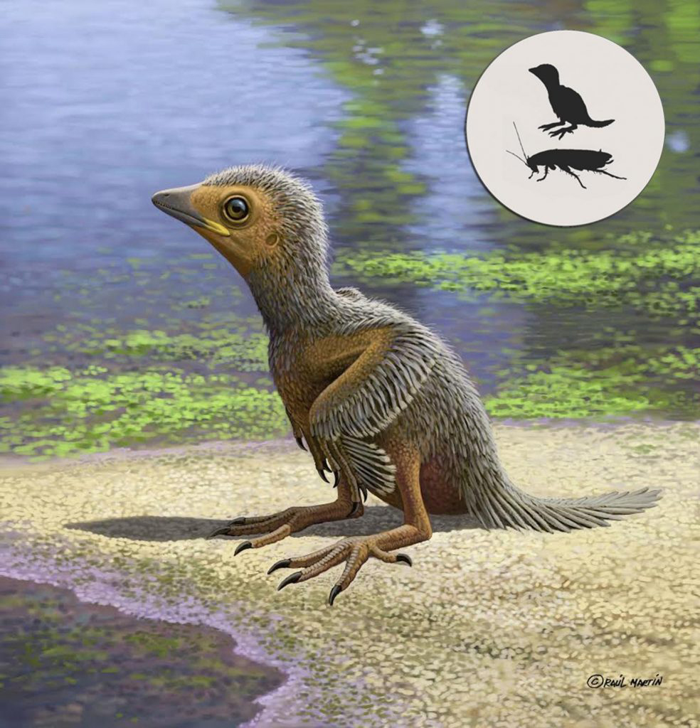 Artist impression of Enantiornithes by artist Raúl Martín. Image Credit: Raúl Martín