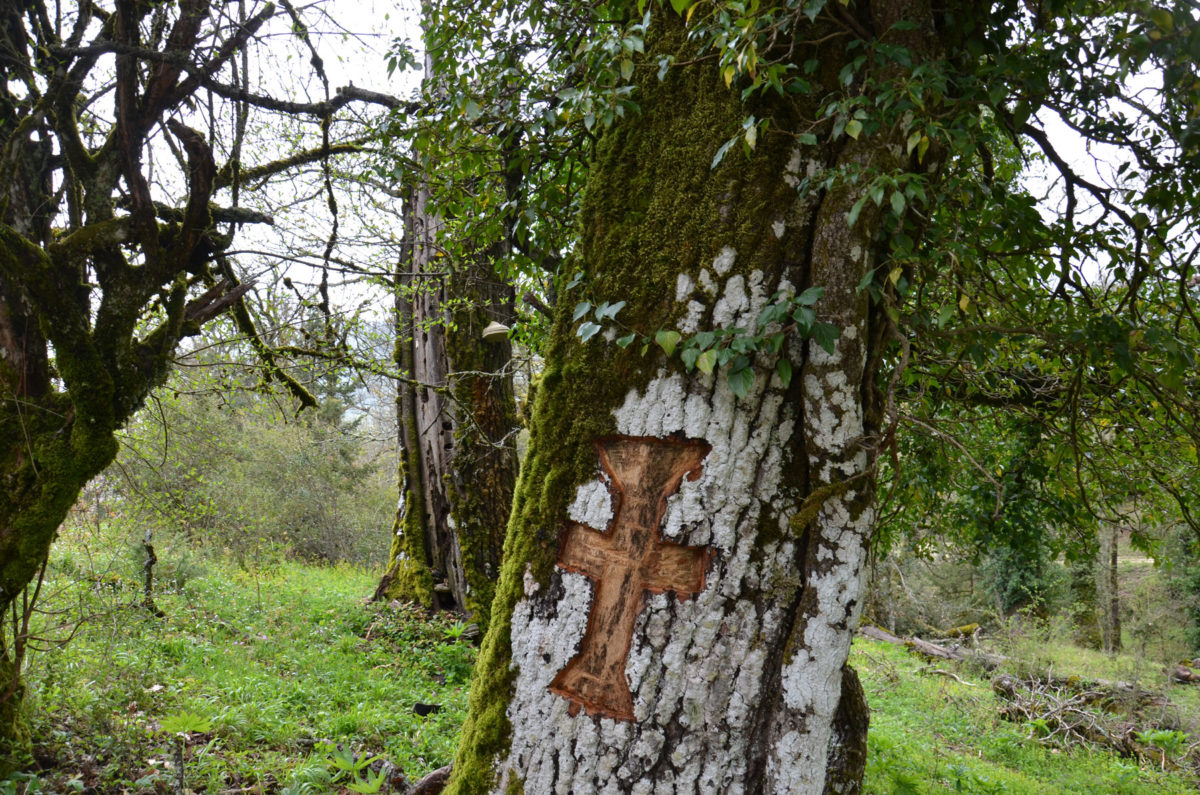 A carved cross on the bark of an old oak tree in the sacred forest of Vitsa fulfils a votive offering to Saint Nicholas to whom the nearby church is dedicated ,celebrating on May 20.In the past this feast day marked the beginning of grazing in the forest (photo: Kalliopi Stara).