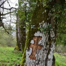 The sacred forests of Zagori and Konitsa