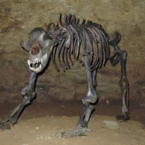 The ban of the cave bear