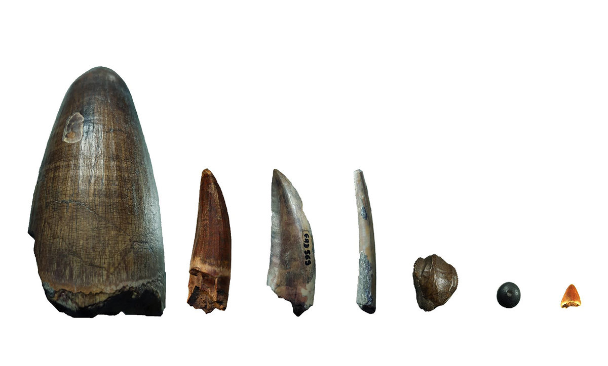 Researchers measured the proportions of different calcium isotopesin the fossilized remains (tooth enamel and fish scales).
