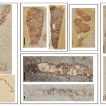Fossilized feces reveal Early Cretaceous aquatic vertebrate diversity