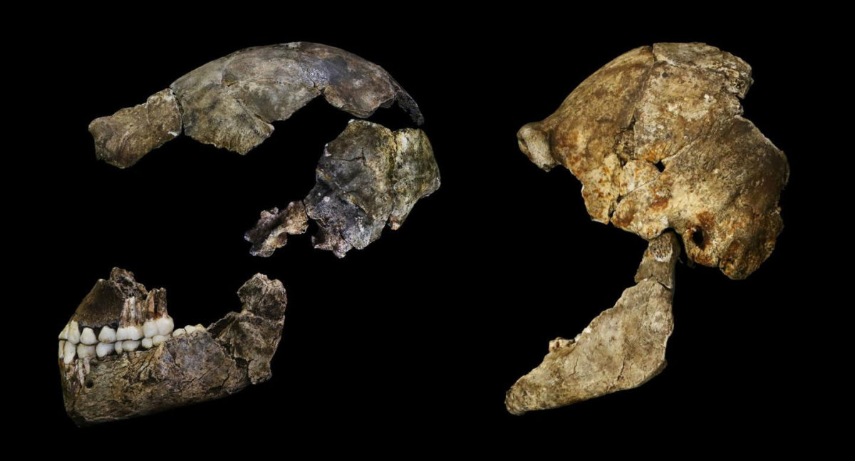 The discovery of Homo naledi by Professor Lee Berger of Wits University and his team at the Rising Star caves in the Cradle of Humankind in 2013 was one of the largest hominin discoveries ever made and hailed as one of the most significant hominid discoveries of the 21st Century.