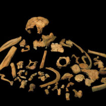 First direct dating of Homo antecessor