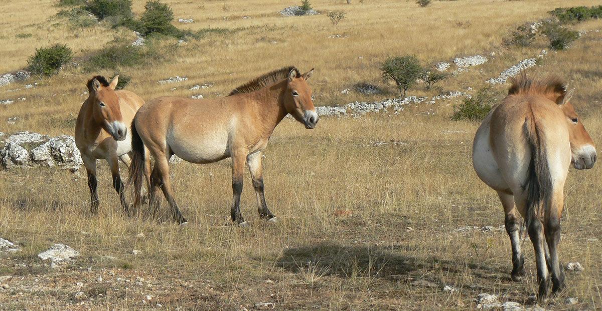 Horses. Image Credit – Ancalagon