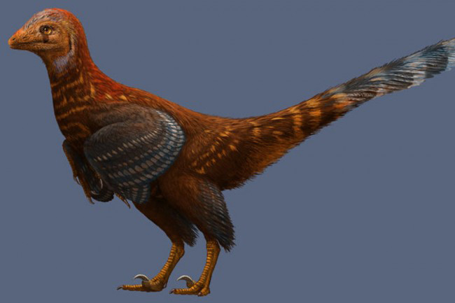 In 2012, scientists discovered 125-million-year-old dinosaur dandruff in China. They also said the dandruff is proof that  feathered dinosaurs lacked sufficient flying skills. Credit: Xing Xu, Philip Currie, Michael Pittman, Lida Xing,  Qingjin Meng, Junchang Lü, Dongyu Hu, and Congyu Yu.