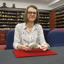 Cranium of a four-million-year-old hominin shows similarities to that of modern humans