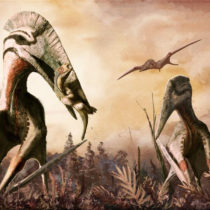 Jurassic diet: why our knowledge of what ancient pterosaurs ate might be wrong