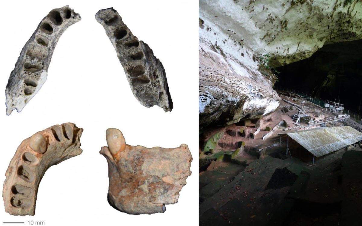 Two human jaws from Niah Caves in Borneo found in 1958 but only just revealed. Top jaw is 30,000 years old, bottom jaw 11,000 years old; left image is Niah Caves archaeological site where they were both found. Credit: Darren Curnoe