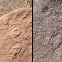 Two new creatures discovered from dawn of animal life