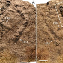 When did animals leave their first footprint on Earth?