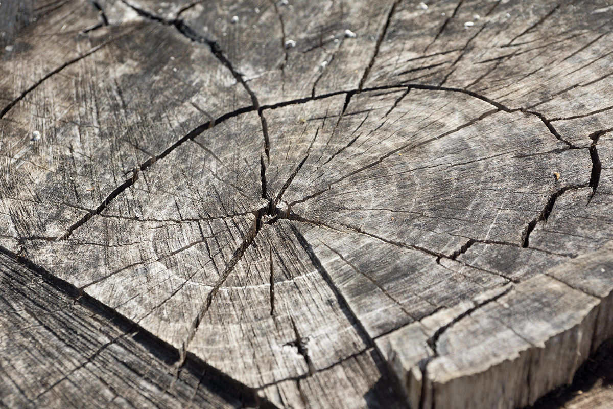 The authors measured a series of carbon-14 ages in southern Jordan tree rings, with established calendar dates between 1610 and 1940 A.D.