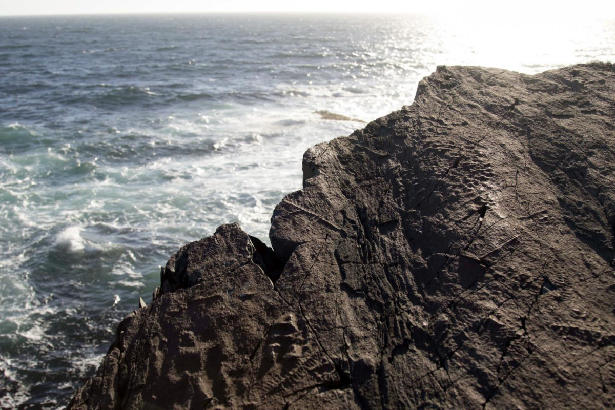 These are Ediacaran fossils at Mistaken Point, Newfoundland. Image Credit: Emily Mitchell.