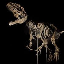 Dinosaur skeleton fetches $2.3 million at auction