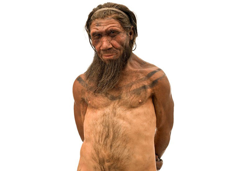 A Neanderthal. Source: Natural History Museum, London.