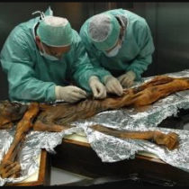 Otzi's last meal contained a remarkably high fat content