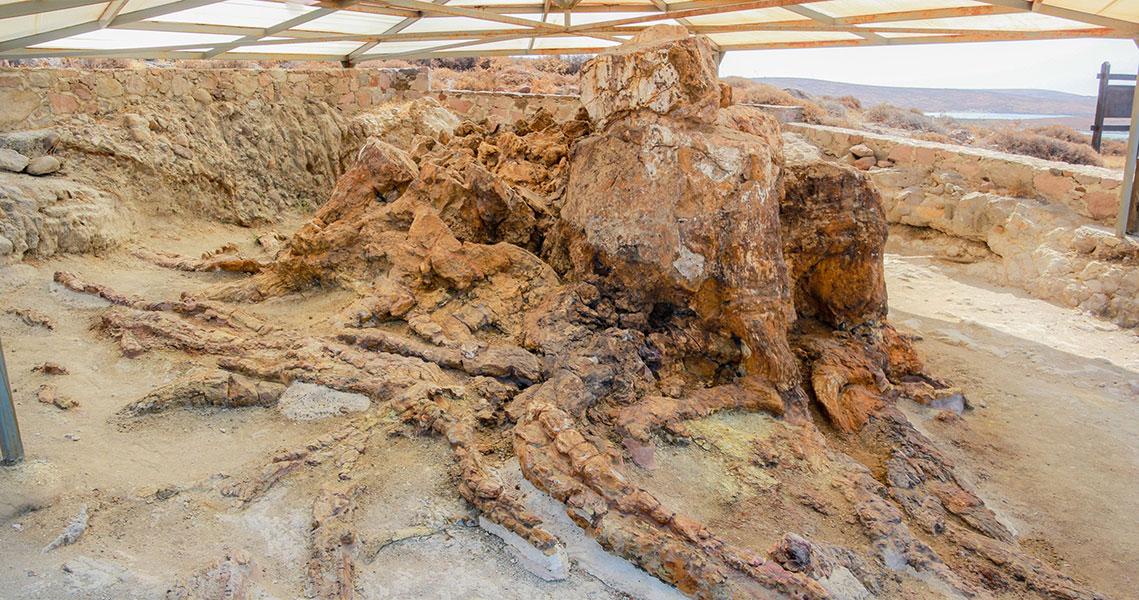 Petrified tree in the Plaka Park.