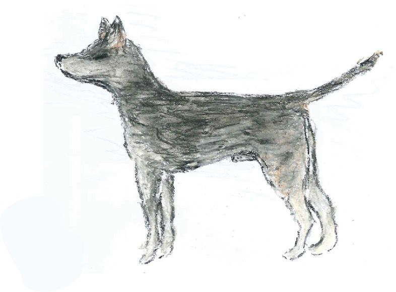 An artist's impression of what the original CTVT founder dog may have looked like. Image Credit: Emma Werner