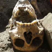 Pompeii: Head of the fugitive discovered