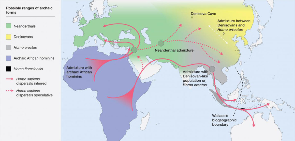 Map of the potential distribution of archaic hominins, including H. erectus, H. floresiensis, H. neanderthalenesis, Denisovans and archaic African hominins, in the Old World at the time of the evolution and dispersal of H. sapiens between approximately 300 and 60 thousand years ago. Credit: Roberts and Stewart. 2018. Defining the 'generalist specialist' niche for Pleistocene Homo sapiens. Nature Human Behaviour. 10.1038/s41562-018-0394-4.