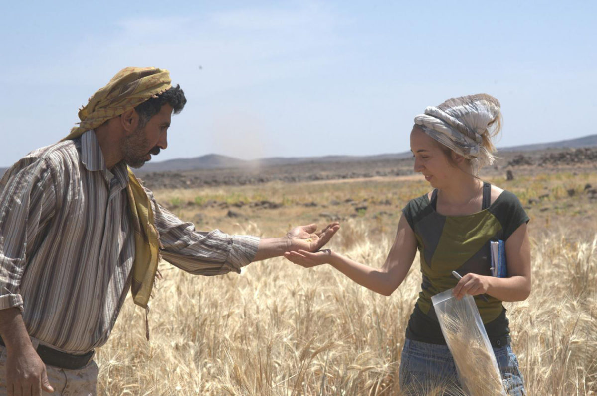 Dr. Amaia Arranz-Otaegui and Ali Shakaiteer sampling cereals in the Shubayqa area. Credit: Photo: Joe Roe