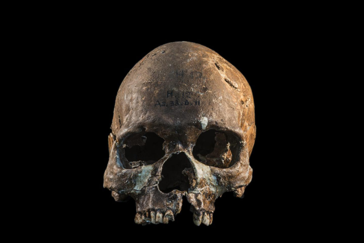 Skull from a Hòabìnhian person from Gua Cha archaeological site, Malaysian Peninsula. Credit : Fabio Lahr