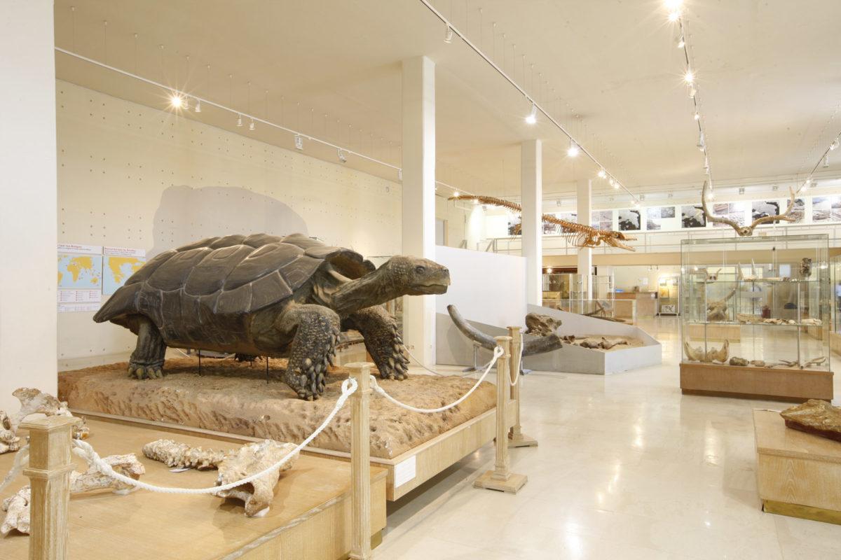 Overall view of the Museum of Paleontology and Geology (photo: AMNA/Vasileios Karakitsios)