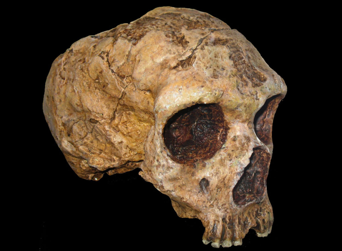 Food sources of Neanderthals would naturally become scarce during colder periods, making them more vulnerable to rapid environmental change. Image Credit: Anagoria.