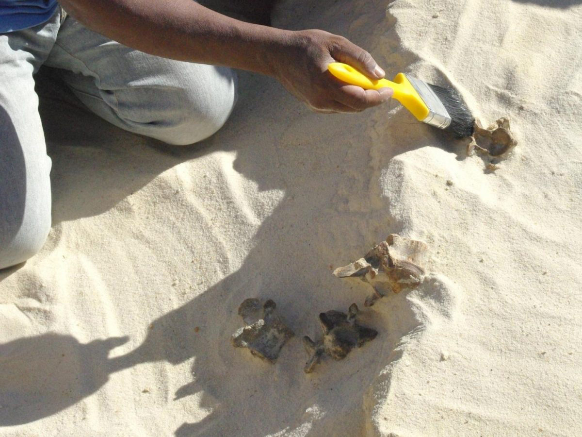 This is an excavation of mammal fossils at the Ti's al Ghadah site, Saudi Arabia. Credit : Palaeodeserts Project (Michael Petraglia)