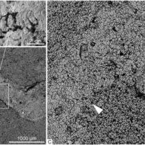 Siberian paleontologists discovered the oldest macro-skeleton remains
