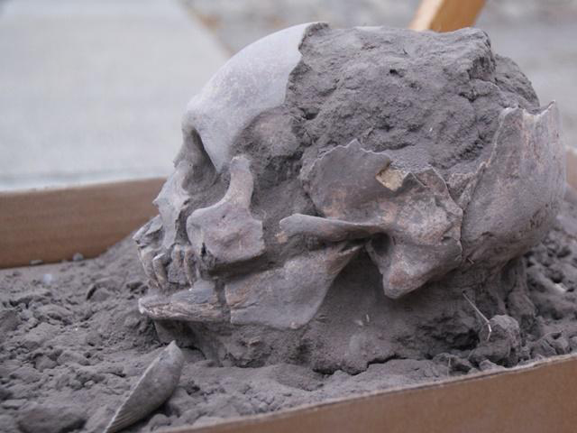 The ancient skull excavated in Loma Atahualpa, Ecuador, 2018, by archaeologists of the Far Eastern Federal University (FEFU) Credit: FEFU press office