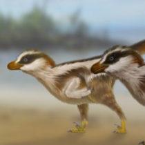 Tiny raptor tracks lead to big discovery