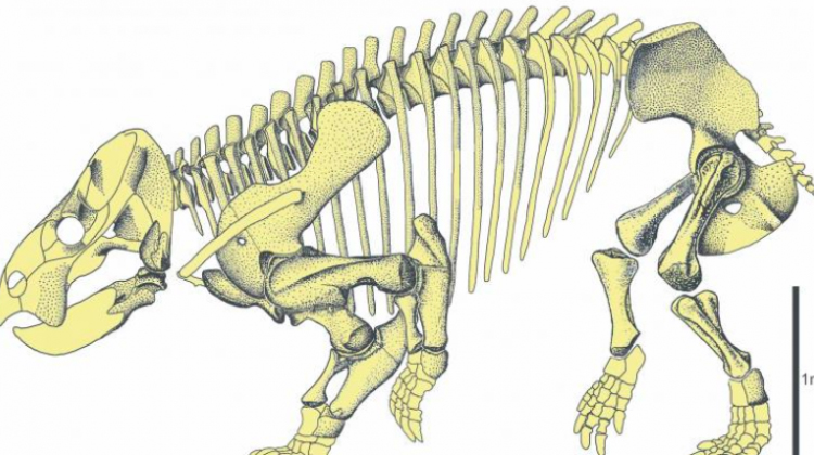 Drawing of Lisiowicia bojani skeleton. Fig.: Tomasz Sulej