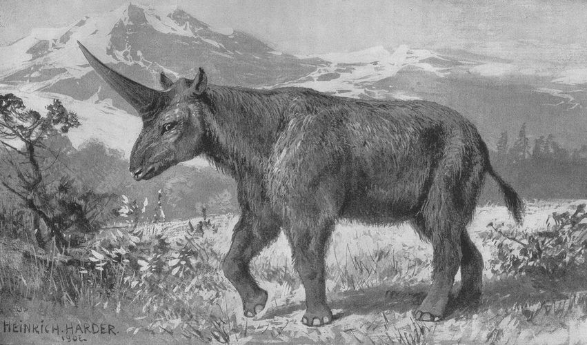 Heinrich Harder's 1908 rendition of a Siberian unicorn. Image credit: Heinrich Harder
